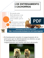 TÉCNICAS DE ENTRENAMIENTO DE CACHORROS