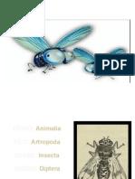 Familia Oestridae Mao