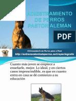 ADIESTRAMIENTO DE PERROS PASTOR ALEMÁN