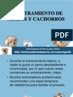 Adiestramiento de Perros y Cachorros