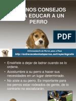 Algunos Consejos Para Educar a Un Perro