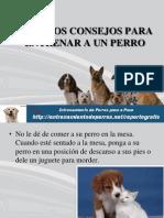 Algunos Consejos Para Entrenar a Un Perro