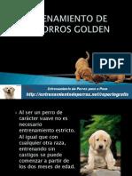 Entrenamiento de Cachorros Golden