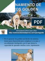 Entrenamiento de Perros Golden
