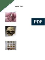 Gambar  fosil