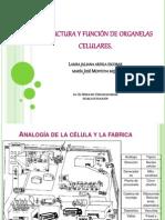 Estructura y Funcion de Organelas Celulares