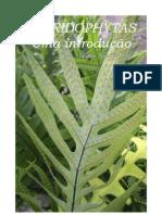 Pteridophytas