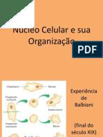 Nucleo Celular e Organizacao