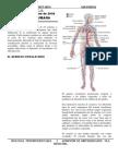 Sistema Circulatorio 2010