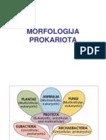 Morfologija_prokariota