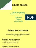 sistemadigestivoglandulasanexas-1226190959558243-8