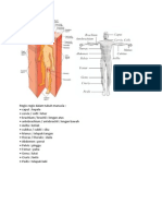 belajar anatomi
