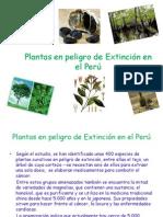 plantasenpeligrodeextincinenelper-110121195511-phpapp02