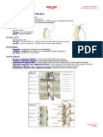 6-Spinal Cord