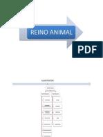 REINO ANIMAL (Invertebrados