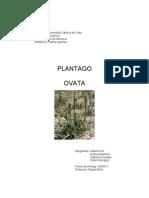 Plantago Ovata Trabajo-1OFICIAL