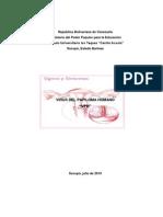 VPH lichaavirus papi