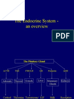 Thyroid & Adrenal Disorders - CCNC
