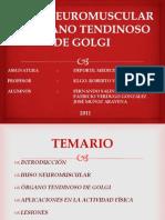 HUSO NEUROMUSCULA Y ÓRGANO TENDINOSO DE GOLGI
