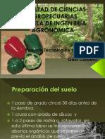 Paquete Tegnologico Pimiento.
