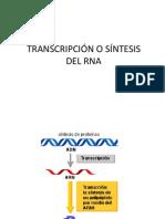 5 TRANSCRIPCION y traducción