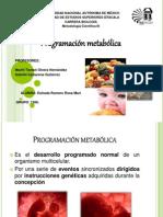programacion metabolica