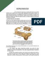 4to Aparato y Sistema Esqueletico