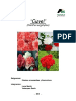 clavel - Floricultura