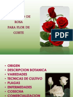 El Cultivo de Rosas