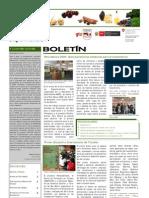 Boletín PBD Nº4