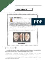 III Bim - 5to. año - Bio - Guía 3 - Reino animal III