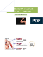 Aula 3 - Reflexos Da Medula - 2010-2