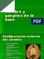 Cerebro y ganglios de la base