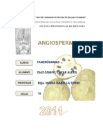 Angiospermas - Magnolidae