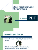 ATP, Cellular Respiration, And Photosynthesis