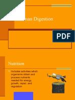 Human Digestion1