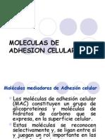 Moleculas de Adhesion Celular 1223605666724403 9