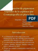 Cromatografía en placa fina espinaca