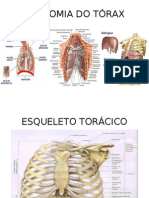 ANATOMIA DO TÓRAX