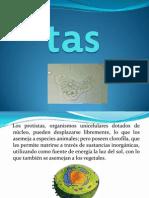 Protistas