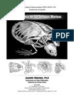 Anatomia de Tortugas Marinas