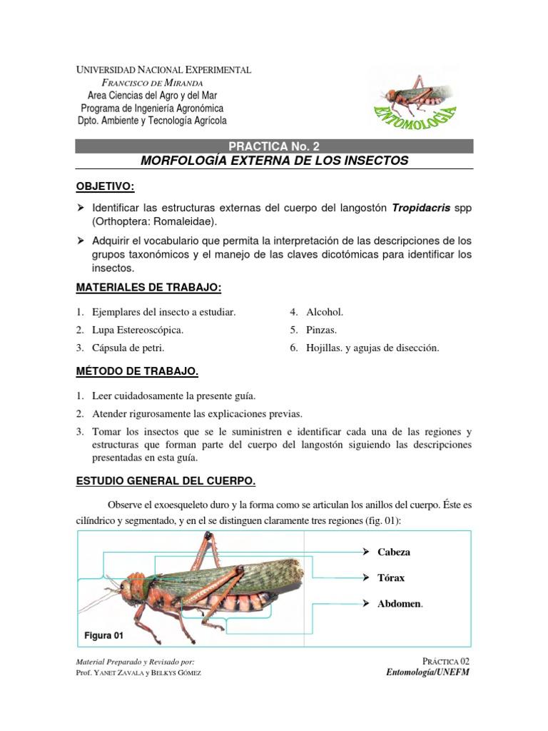 Introducción a la Entomología: Morfología Externa de los Insectos