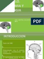 Cerebelo Anato y Fisio