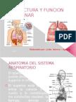 Estructura y Funcion Pulmonar