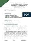 Relatorio Do Ciclo Celular