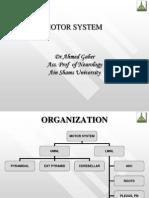 Motor System Examination