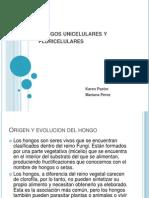 Hongos Unicelulares y Pluricelulares[1]