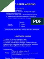 Cartilago y Oseo1