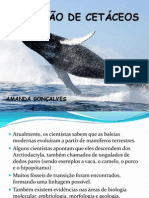 Evolução dos Cetáceos AMANDA