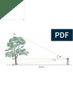 Tree Height Measurements